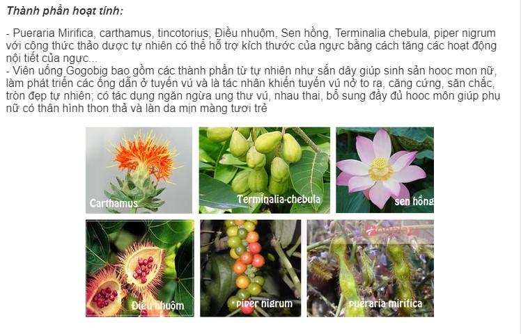 Các nguyên liệu chính của thuốc nở ngực Gogobig
