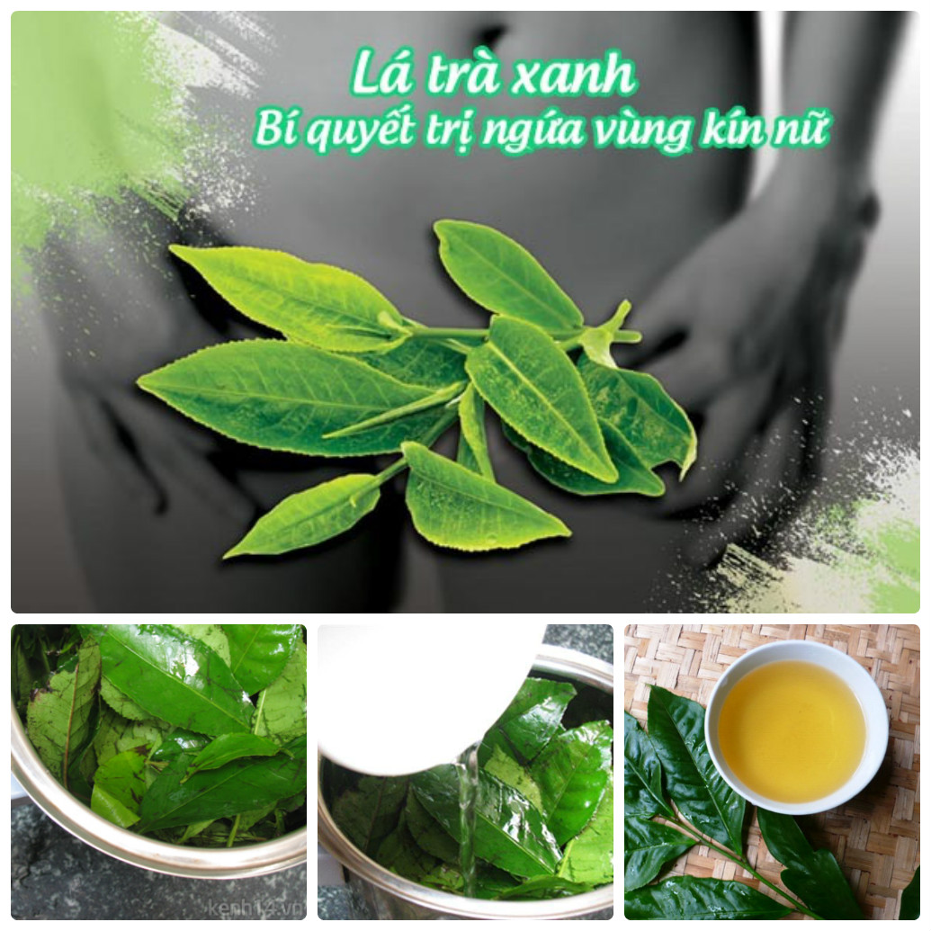 Bạn cũng có thể dùng lá trà xanh làm sạch vùng kín
